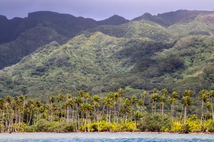 Des cocotiers et des montagnes!